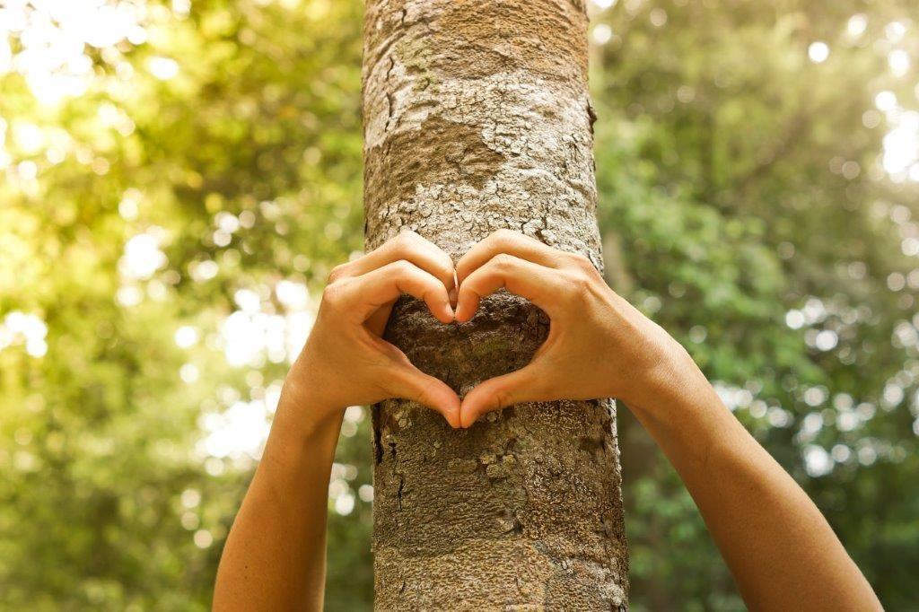 Main qui font un cœur devant un arbre