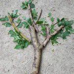 branche d arbre