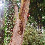 ecureil sur un arbre