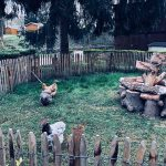 Enclos de poules