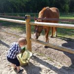 enfant qui nourrit un cheval