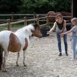 une femme et une fille veulent caresser un poney