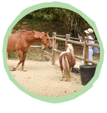 Icone enclos des chevaux