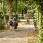 Balade en cheval au camping Pré des moines